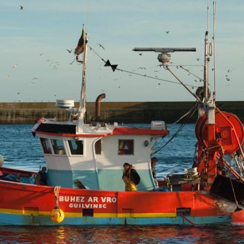 Retour de pêche en Finistère Sud